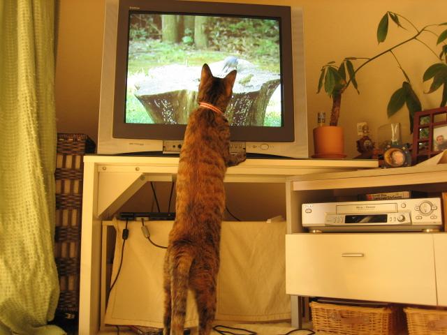 猫が見るビデオ2