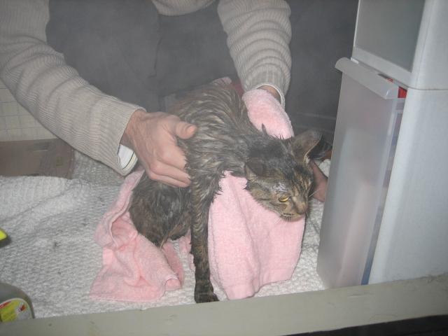 洗猫in湯船
