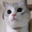 Amebaいちおし有名ブログ