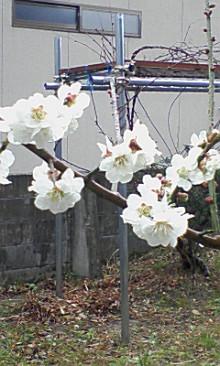 資材屋日記 ReNEW-090320_0753~01.jpg