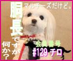 駄犬ぐっちゃん賢犬カレン-胴長同盟#129