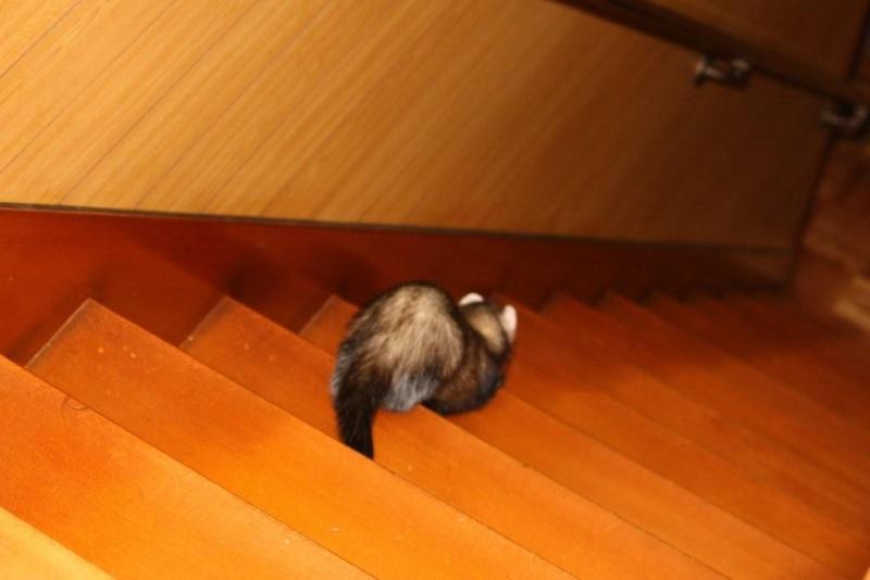 こがっち's Private Room~No.2~-階段を下りて去る