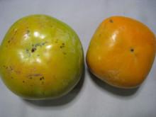 和歌山・粉河 観音山のレモン&みかん畑より
