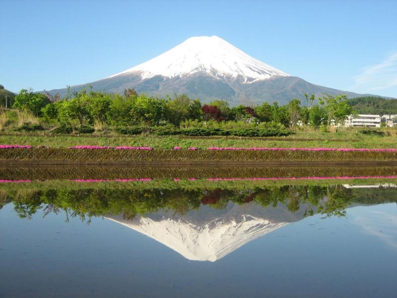 中野美奈子のパンチら画像vs逆さ富士
