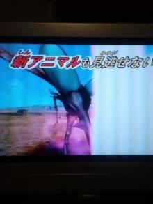 アニマルカイザー六匹目 YouTube動画>1本 ->画像>10枚