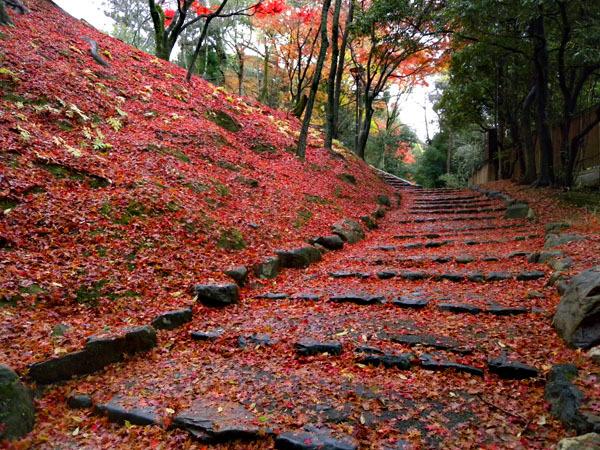Basic Info: Fall Foliage/ Autumn leaves in Kyoto|西陣に住んでます