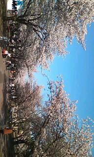 男のラーメン【麺屋 武士道】のブログ-100408_1642~010001.jpg
