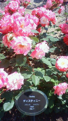 """$「未病」「体質改善」「不定愁訴」に 東洋三大療法""""推拿(すいな)整体""""-shanti pic rose"""