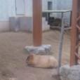 HEY-SMITH 猪狩の画像