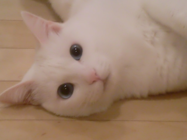 ずれずれブログ…湘南で猫と暮らせば…