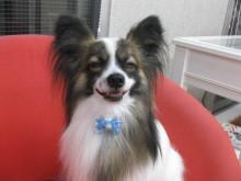 DogcareHouse MOTOMACHIのブログ