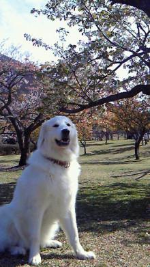 超ビッグ犬&バイクでMr.ワットマ〜ン♪の寝言!!