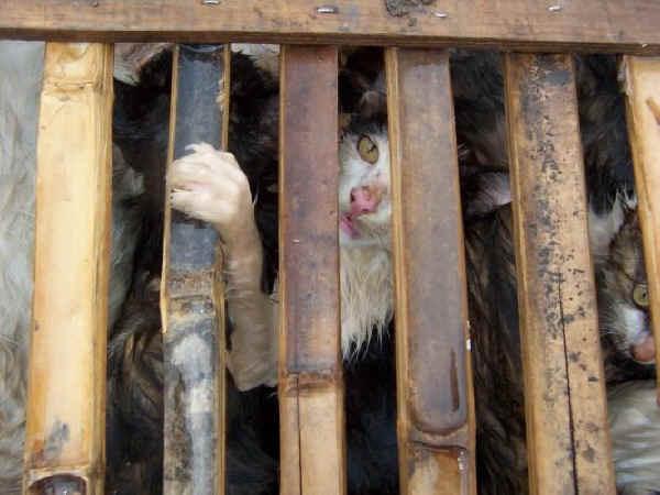 ベジタリアンってね いいよ。 2011年は動物愛護法改正の年!生後8週以下の幼齢動物を親兄弟から離さないで