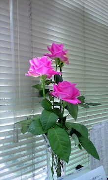 神戸 バイタルリアクトセラピー モリタ鍼灸整骨院のブログ