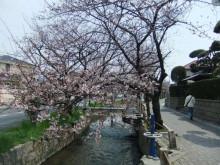 本と散歩と珈琲と-sakura
