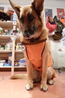 犬店長ベログ