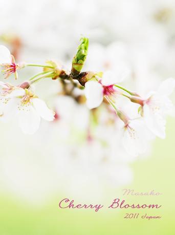 あなたとサロンの美力(ゴールド)を引き出すオリジナルヘッダー-桜写真2011