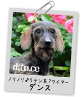 カニンヘンワイヤーダンスのページ