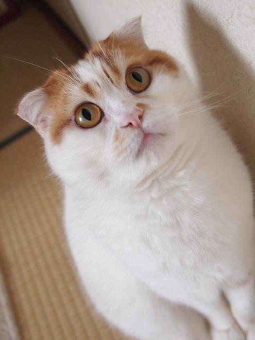 加東和の「そっくり招き猫」「開運招き猫」