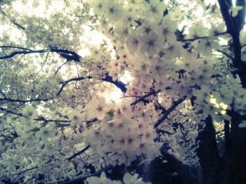 近野成美の画像