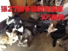 猫27匹多頭飼育崩壊SOS靜岡