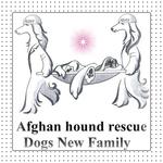 アフガンハウンドレスキュー・ドッグズ ニュー ファミリー