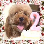 2011/08/25 ココア2歳のお誕生日