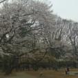 矢ヶ崎一樹の画像