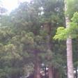 加納尚樹の画像