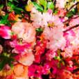 野沢和香の画像