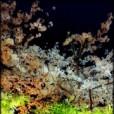 ミッツ・マングローブの画像