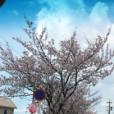 矢部美穂の画像