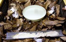 手前の白い粉末がエスカルゴの餌