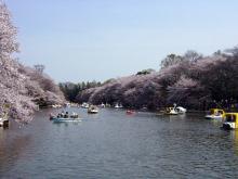 井の頭恩賜公園(東京)-1