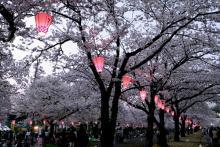 万博記念公園(大阪)-2