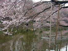 井の頭恩賜公園(東京)-2