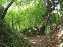 袖きり坂の竹