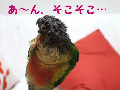 ぽりぽり3