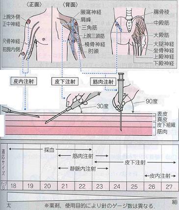 看護基礎教育における静脈注射に必要な解剖・生理学の教授内容 …