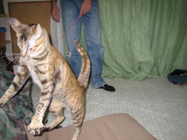 猫ハンター(ティア編)