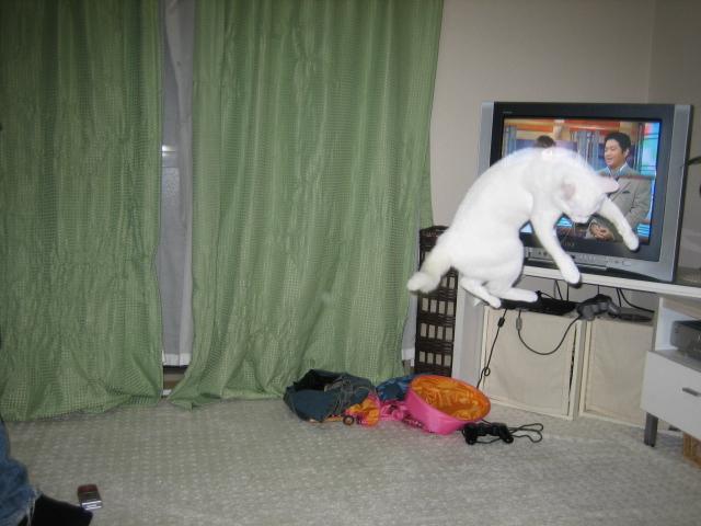 猫ハンター?(フェイ編)