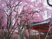 平安神宮(京都)-2