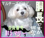 駄犬ぐっちゃん賢犬カレン-胴長同盟#15