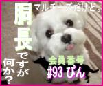 駄犬ぐっちゃん賢犬カレン-胴長同盟#93