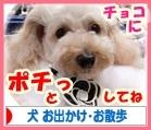 犬ブログ お出かけ・お散歩