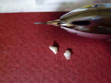 和光市にあるアルファ矯正歯科クリニックからのお知らせ