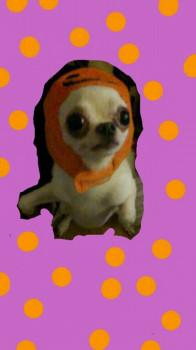 DJ MaRiaの画像
