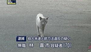 矢部美幸の画像