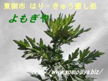 yomogi2-1