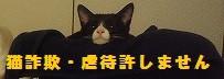 猫詐欺防止ウェブサイト
